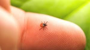 Take the Bite out of Lyme Disease